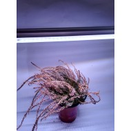 LED GROW trubica pre rast rastlín, 18W, 120 cm, plné spektrum - slabo ružová