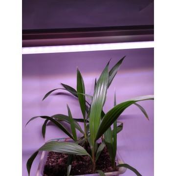 LED GROW trubica pre rast rastlín, 10W, 60 cm, plné spektrum slabo ružová